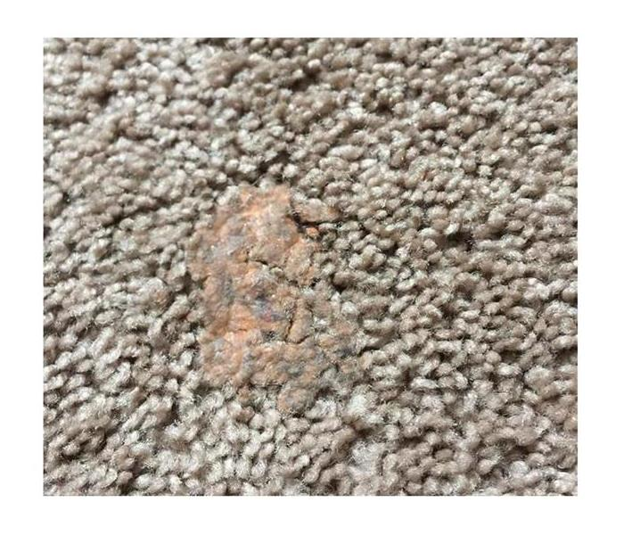 Gum Dried Into Carpet Before