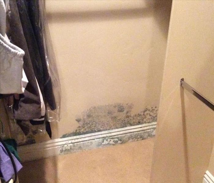 Mold Growth in Closet Before