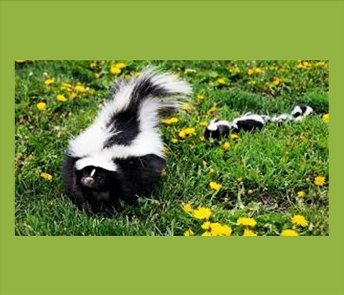 General Skunk Spray You? Here's a Tip To Help