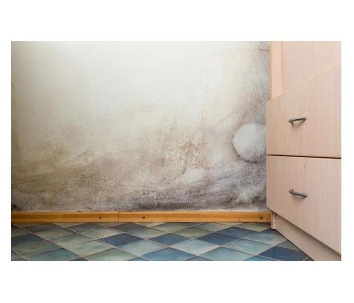 Mold Remediation Avoid Mold in the Heat