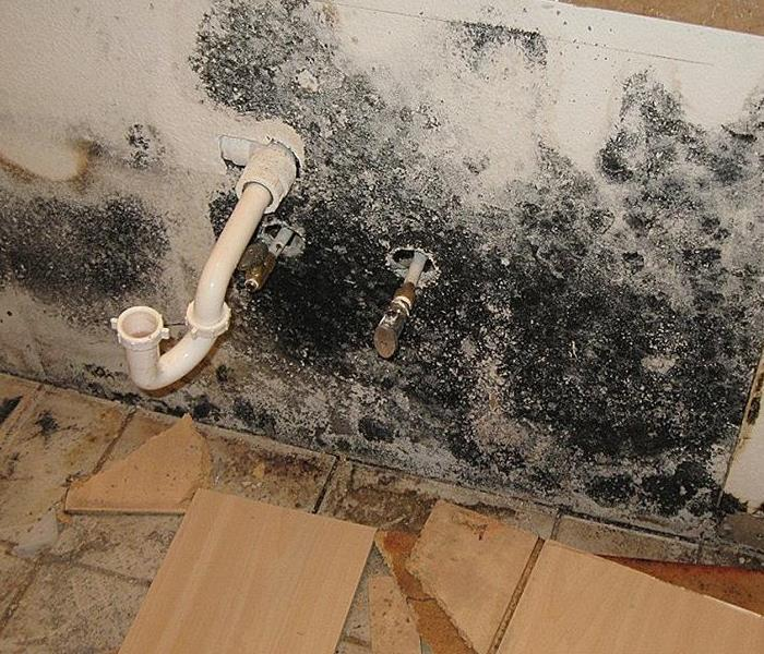 Bathroom Black Mold: SERVPRO Of Auburn / Rocklin
