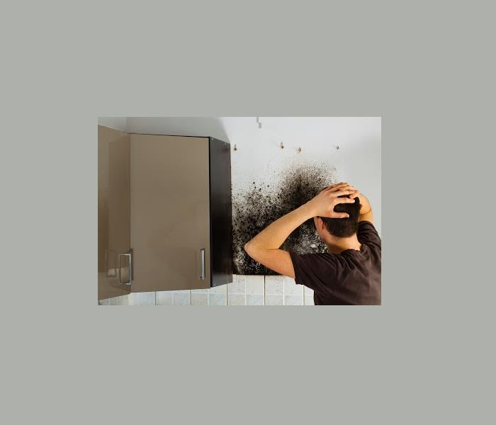 Mold Remediation Professional Mold Testing and Cleanup Services