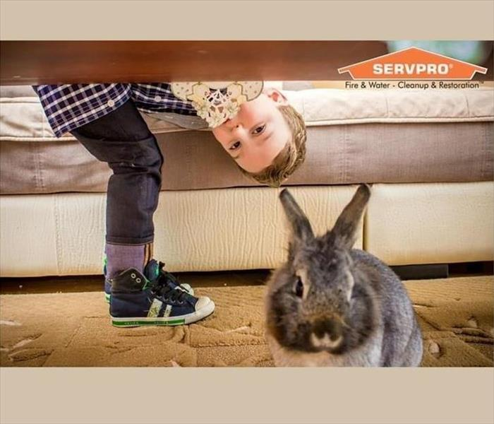 Cleaning Did The Easter Bunny Leave A Mess? Our Professional Cleaning Crew Can Help