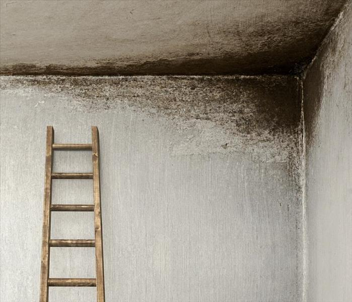 Mold Remediation MOLD? We Can Help
